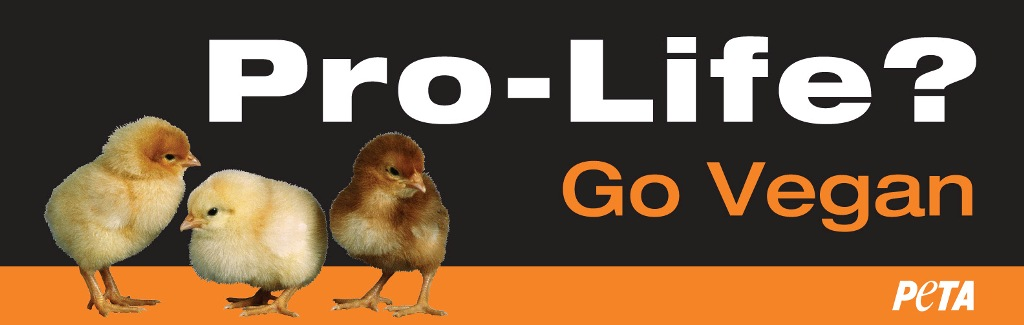 too chicken to develop their own slogan peta rains pro life