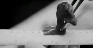 Dennis Christensen abortion 5
