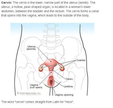 Cervix Def