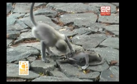 Monkey Baby2