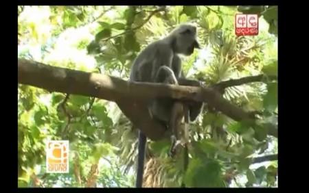 Monkey Baby3