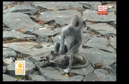Monkey Baby5