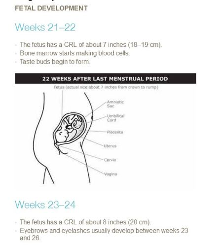 PP Fetal develop 21 to 24 weeks