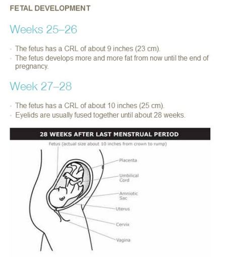 PP Fetal develop 25 to 28 weeks