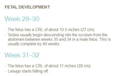 PP Fetal develop 29 to 32 weeks