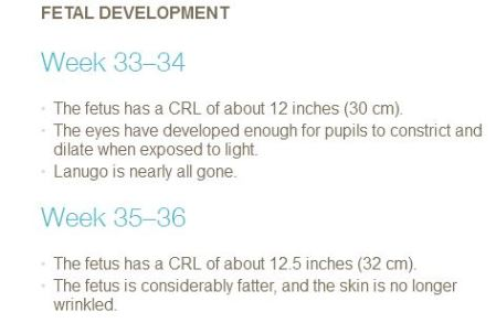 PP Fetal develop 33 to 36 weeks