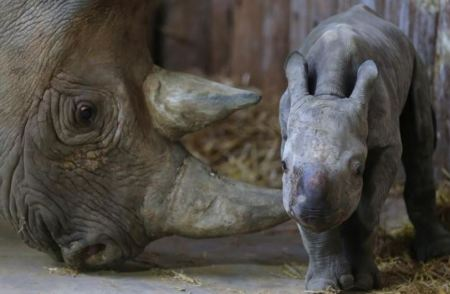 Rhino and mom
