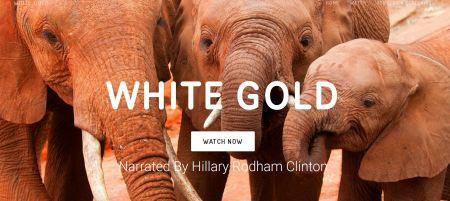 White Gold Hillary