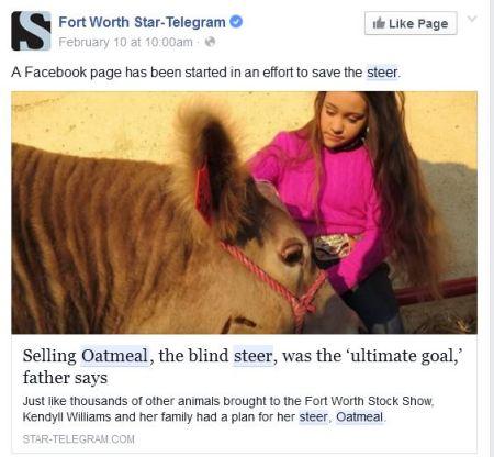 Oatmeal Steer Cow FB