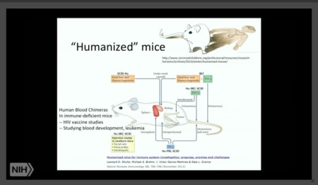 Image: Humanized Mice Chimeras